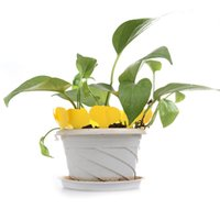 Wholesale Yellow Color set T type Plastic Nursery Garden Plant Label Flower Thick Tag Plant Tag