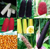 bags corn - 20seeds bag corn seeds fruit pineapple corn black sweet white day waxy corn seeds vegetable seeds