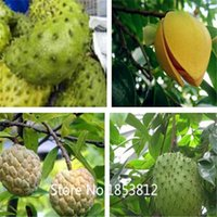 Fruit Seeds best quality seeds - Sale kinds Soursop Seeds Organic Heirloom Seeds Fruit Seeds NON GMO Best Quality Price