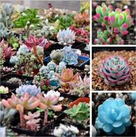 Wholesale 100pcs Mix Succulent seeds Lithops Pseudotruncatella Bonsai plants Seeds for home garden