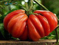 Wholesale 10 Seeds Tim s Black Ruffle Heirloom Tomato Non Gmo Luscious Purple Fruit Rich Flavor