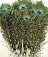 Wholesale price Real Natural Peacock Feather fashion hair Extension Beautiful Feathers cm cm