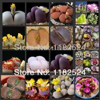 Wholesale 200 SEEDS Genuine Lithops Aizoaceae MIX living stones colorful faces Bonsai Succulent Plant Seeds