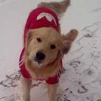Wholesale 5pcs Pet Winter Supplies Dog Puppy Cotton Hoodies Golden Retriever Husky Outdoor Coat PD112
