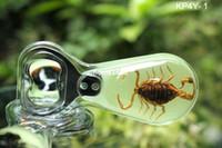 amber beer bottles - Promotional Gift Luminous Scorpion Amber Beer Bottle Opener Refrigerator Magnet Mixed