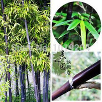 bamboo fence - Mini bamboo fence seeds Potted foliage plants kinds of color of bamboo seeds PC