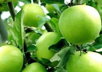 australia fruit - 1000pcs a set australia green apple fruit Seed real Reasonable Price And Good Quality Home Garden