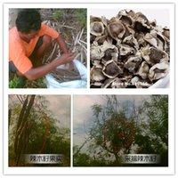 100g moringa leaf tea health care products - Real chinese Moringa oleifera seeds tea g Rare Lamu fruit herbs pure Natural Organic moringa health care suplementos food products