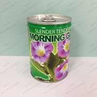 morning glory seeds large morning glory plants diy novelty tin cans flowers planting office mini plants cheap office plants
