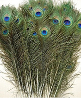 Wholesale 200pcs Feather PEACOCK TAILS quot quot Tail Feathers Fan free P P
