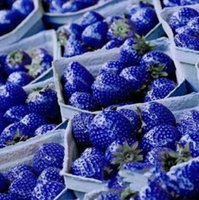 Common Common bag 2015Hot Natural Sweet Blue Strawberry Seeds Nutritious Delicious Plant Seed DIY Garden fruit seeds potted plants,garden supplies