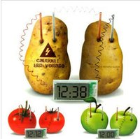 american home school - Potato Clock Green Science Project Experiment Kit kids Lab HomeSchool Curriculum DIY Home School Toy Mr Spud Head Educational