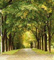 avenue free shipping - 10 feet CM Photography Backdrops Romantic avenue of trees fondos para la foto de estudio