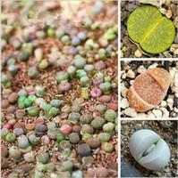 Cheap 100pcs. Mix Double valve Succulent Lithops Stone Flowers seeds Bonsai plants Seeds for home & garden