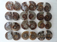 Wholesale 22mm mm JURASSIC NATURAL AMMONITE FOSSIL CUT SLICE FOSSIL