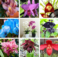 bonsai plants - Garden Plant piece orchid seeds New Garden Flowers Four Season Sowing World Rare Flower Seeds For Garden Bonsai Seed