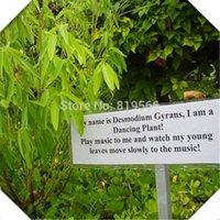 Wholesale Rare Desmodium gyrans grass Seeds Seeds green Outdoor garden dancing Plants indoor home bonsai courtyard Sementes