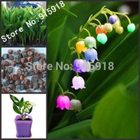 Cheap Flower Bonsai seeds 120pcs import bell orchid seeds,Windbell orchids, rare precious flowers! Home gardening DIY