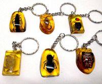 amber key - mixed amber amp real insect bug key pendants keychains key ring ring spun cotton yarn