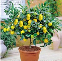Wholesale 2015 fashion green LEMON TREE SEEDS WITH HERMETIC PACKING INDOOR OUTDOOR AVAILABLE HEIRLOOM FRUIT SEEDS