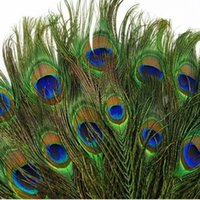 Wholesale 100pcs New Real Natural Peacock Tail Eyes Feathers Inches about cm
