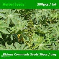 bi oil - Widely Cultivated Ricinus Communis Seeds Medicinal Uses Castor Oil Plant Herbal Seeds Flowering Plant China Bi Ma Seeds