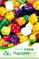 bell pepper - 10 Multicolored bell peppers seeds capsicum frutescens L var grussum Bailey C024
