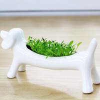 Wholesale Miser Dog Aerobic Planting Creative DIY Pot Plant Home Decor beside Computer Decoration Potted Plants Bonsai