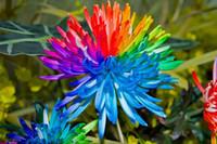 Семена цветущие Цены-100 Семена ромашки Ливингстон Daisy Семена, горшечные семена, цветы семена, разнообразие полное, проросший ставка 95%