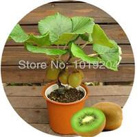 08 bags malaysia - Malaysia mini kiwi fruit bonsai plants delicious kiwi seed bag seed and small fruit trees