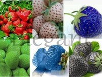 Fruit Seeds the four seasons - 2015 Direct Selling Mexican Hat The Four Seasons of Sowing Seeds of Climbing Balcony Potted Flower To Fruit Strawberry Seed Bao Faya