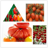 beautiful vegetable gardens - 50pcs Colors Beautiful tomato Seeds Vegetable Seeds rare color new arrival DIY Home Garden flower plant Bonsai Seeds Free Sh