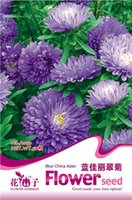 aster flowers - 50 Blue China Aster Flower Seeds Callistephus Easy to grow A059