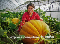 big pumpkin seeds - Super Big Pumpkin seeds Giant Pumpkin Seeds Vegetable Seeds Seed particles