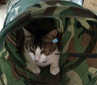 Wholesale Camouflage Cat Tunnel Collapsible Pet Toy Fun Toys Kitten Play Tunnel including suspended balls Camouflage Color