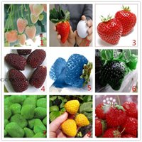 Cheap fruit seeds Best strawberry seeds