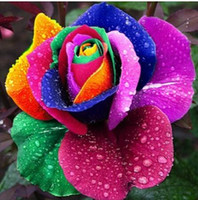 Wholesale Colorful Rainbow Rose Seeds Multi colored petal new and creative Multi color Plants seeds