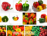 bell peppers seeds - Promotion Colorful Sweet Pepper Seeds Yellow Purple Red Green White orange black Mix Sweet Bell Pepper Seeds vegetable se