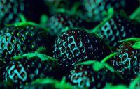 Cheap 1bag=300PCS HOT SALE Black Strawberry Seeds Bonsai Rare Fruit Seeds climbing PLANT ORGANIC Home & Garden Exotic free shipping