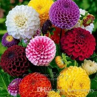 Wholesale 100 Mixed Zinnia Elegans Seeds Flower DIY Garden Plant Provide Year Round Beauty