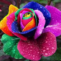 al por mayor rainbow rose seeds-semillas de flores hermosas coloridas de Rose del arco iris Semillas de la planta de jardín barata hermosa de 100 piezas por paquete de todo tipo envío libre