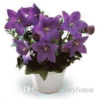 balloon flower plant - Balloon Flower Platycodon Grandiflorus Perennial Flower Seeds for planting Easy to grow