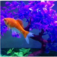 Wholesale Retail Magical novel Robot Fish Activated Turbot Electronic Pets Toys Electric Robofish Swimming Clownfish