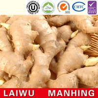 agricultural product prices - Competitive price new harvested young ginger with mesh bag agricultural products
