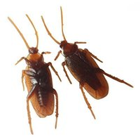 Wholesale Fake Roach Prank Novelty Cockroach Bugs Look Real Dark Brown Set of