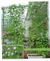 Wholesale 180X180cm High Quality Climbing Plant Web Morning Glory Gourd Cucumber Climbing Net Mesh Nylon Net for Garden Use