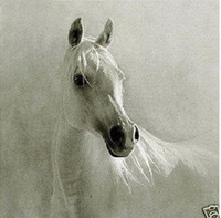 Wholesale Canvas Decors - beautiful white horse,Pure Handpainted Modern Abstract Decor Wall Art Oil Painting On Canvas.customized size accepted,Free Shipping,ali-best