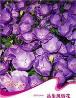 abutilon plant - Bellflower Seeds Campanula Medium Abutilon Striatum Dicks Flower Garden Plants A099