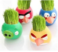 Wholesale 48Pieces Angry birds mini potted plants Grass planting cultivation toothed burclover doll office home supplies