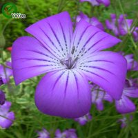 agrostemma seeds - Purple Agrostemma Seeds Bonsai Flower Seeds Potted Plants Flowers Particles Bag g004